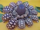 各尺寸蘇卡達象龜與其他私藏陸龜廉讓,合法店家有保障