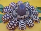 各尺寸蘇卡達象龜、大白豹與各種私藏陸龜交流與廉讓