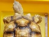 各尺寸蘇卡達陸龜與販售保溫設備,合法店家有保障