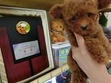 泰 迪 熊 ♥ 紅 貴 賓 B a b y*( 提供刷卡服務 )*