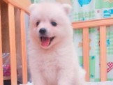 ●安心賣家~最高星評價~實體店面~超可愛小白熊