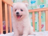 ●安心賣家8000~最高星評價~實體店面~超可愛小白熊