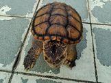 割愛,寵物龜龜、角蛙找新主人